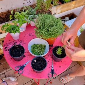 Gourmet Garden Creation